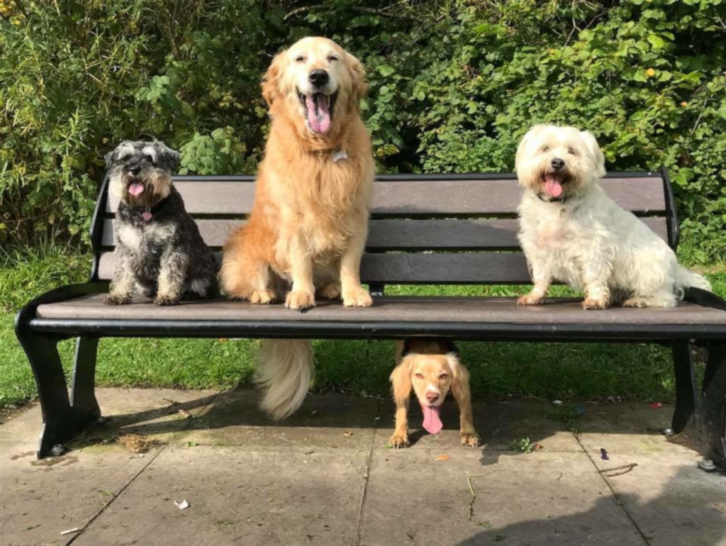 dogs posing on park bench