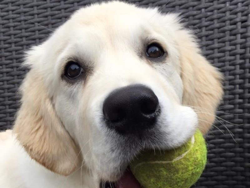 Puppy with a ball